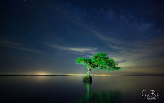 florida, swamps, lakes, creek, blue cypress, trees standing in water, stars,