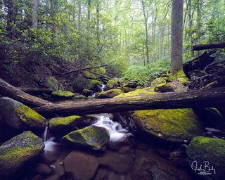 Cosby Creek #3