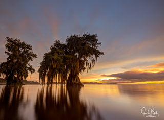 Cypress Sunset #6