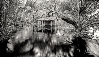 florida, fisheating creek, large format, film