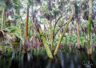 florida state parks, myakka river, forest, flood, large format film
