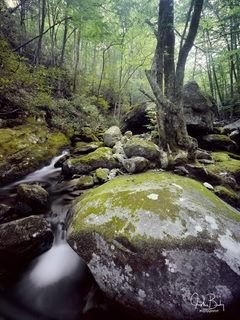 Blue Ridge Forest #2