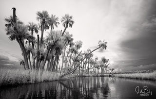 Chassahowitzka River, infrared, Sabal Palm, River, Florida