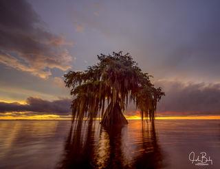 Cypress Sunset #5