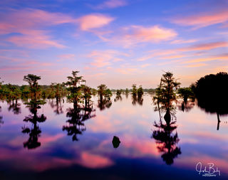 Dead Lakes Sunrise #1