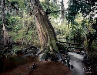 Shell Creek #7