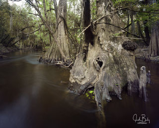 Shell Creek #3