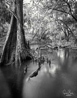 Shell Creek #6