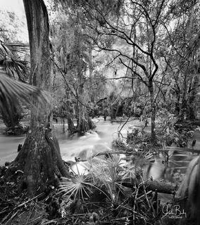 Telegraph Creek #10