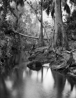 Telegraph Creek #3