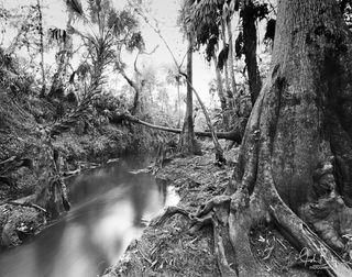 Telegraph Creek #2