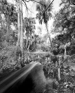 Telegraph Creek #4
