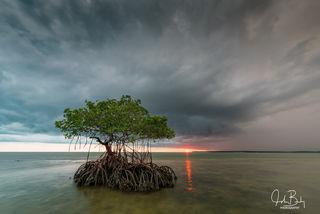 the ten thousand island national wildlife refuge, mangroves, everglades national park, jewel key, hog key, round key, turkey key, white horse key, rabbit key, demijohn key, dismal key, lost mans river