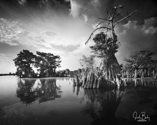 the dead lakes, ancient cypress, trees in water, large format film, photography