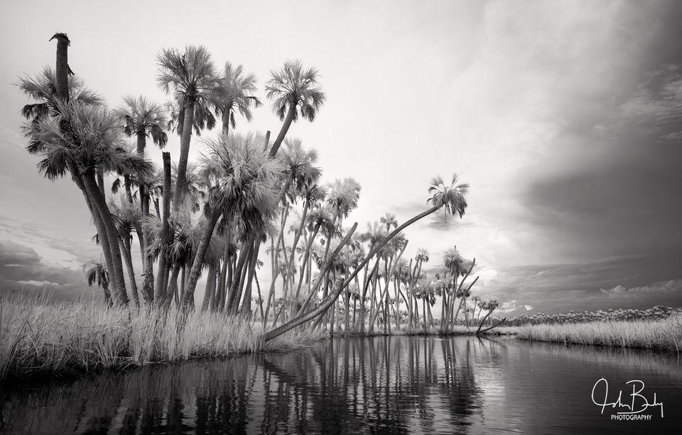 Chassahowitzka River, infrared, Sabal Palm, River, Florida