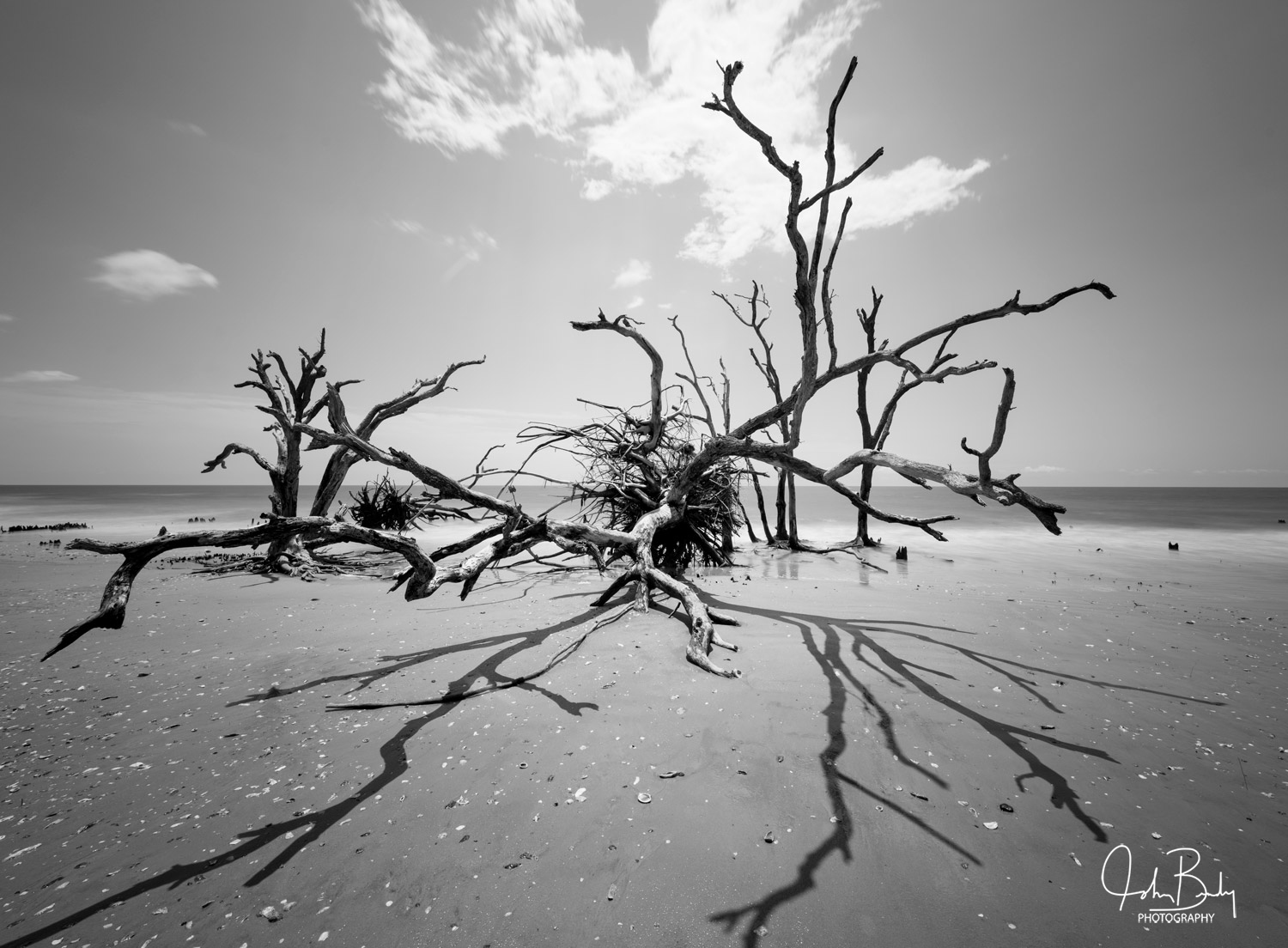 South Carolina, deist island, botany bay, oak trees standing in the ocean, abstract, photography