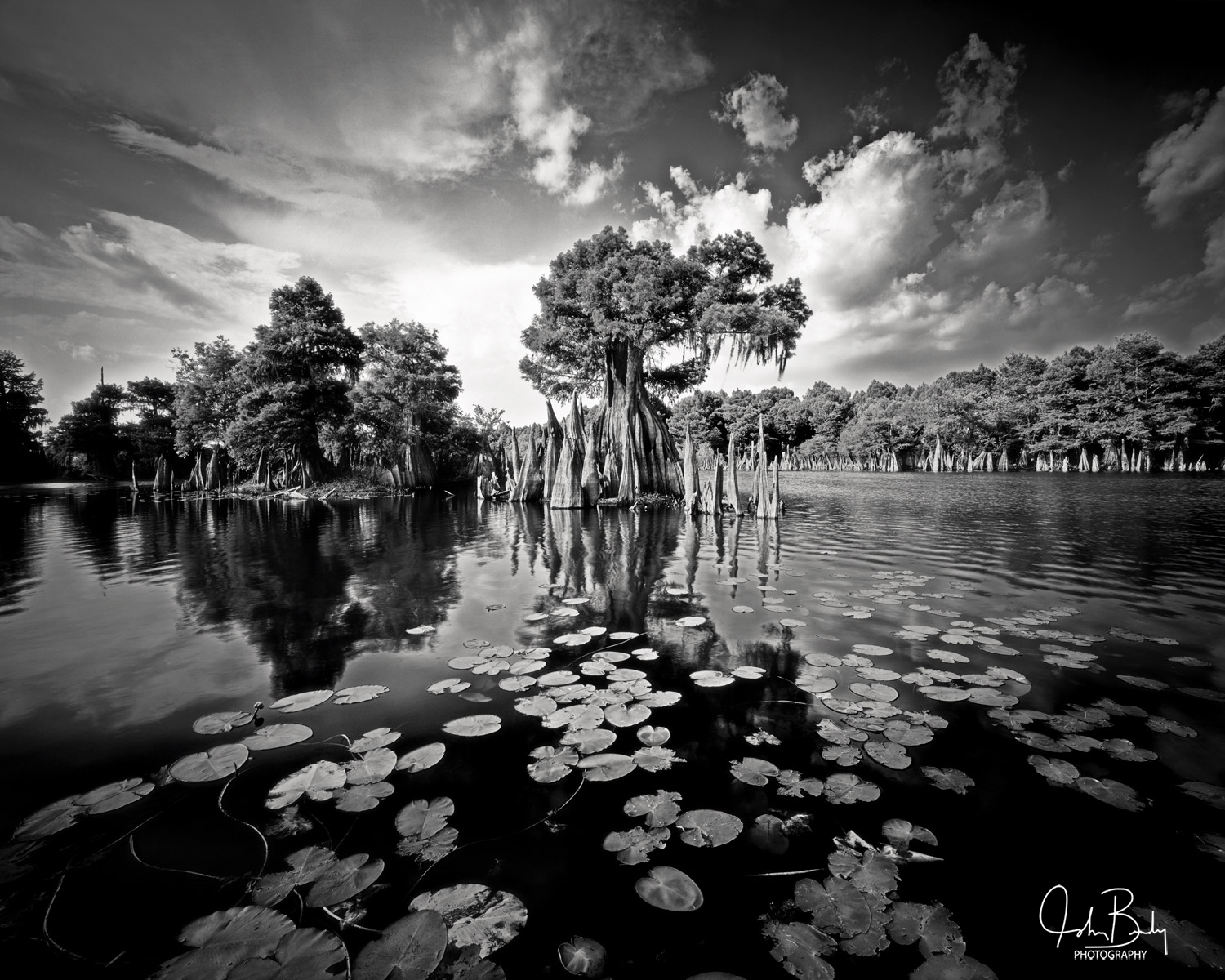 the dead lakes, ancient cypress, trees in water, large format film, photography, photo