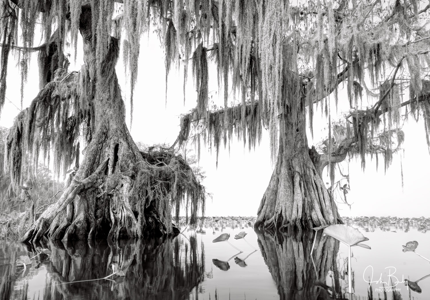 Florida has many beautiful fresh water Lakes, I'm drawn to the ones that have Cypress trees standing defiantly in the water...