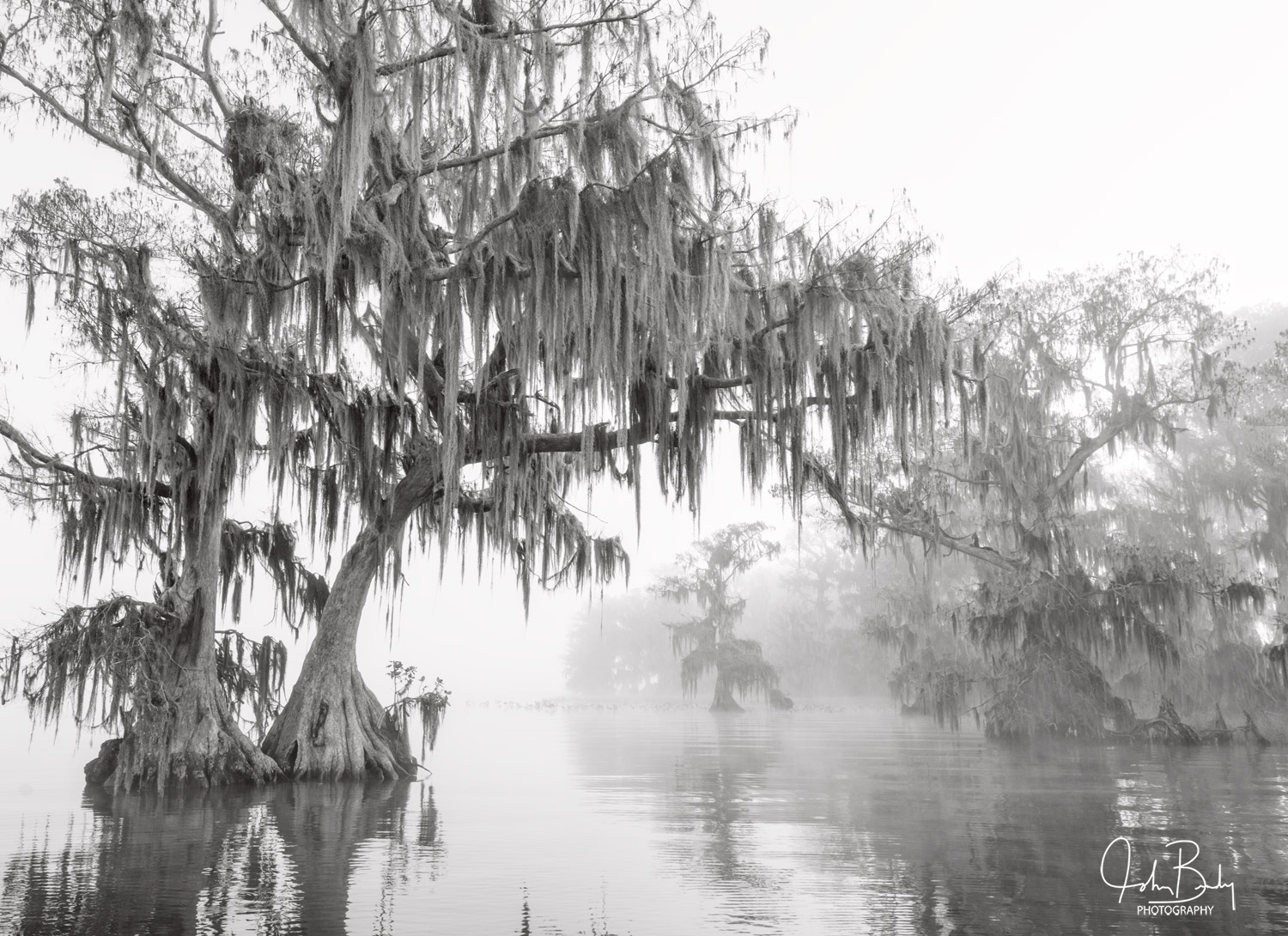 lake istokpoga, fog, cypress, swamp, florida, large format film photography, photo