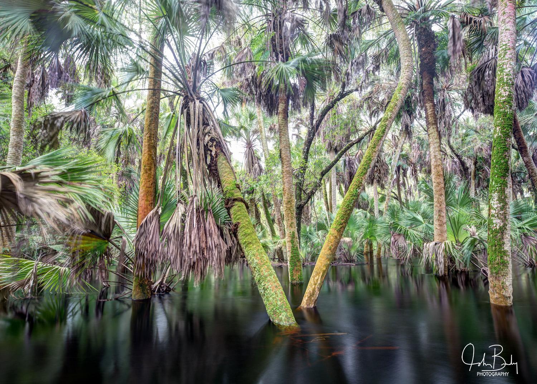 florida state parks, myakka river, forest, flood, large format film, photo