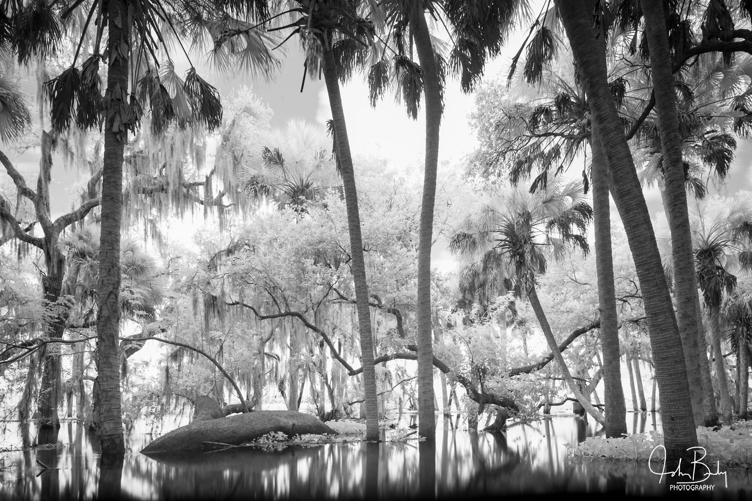 florida state parks, myakka river, forest, flood, large format film, photo