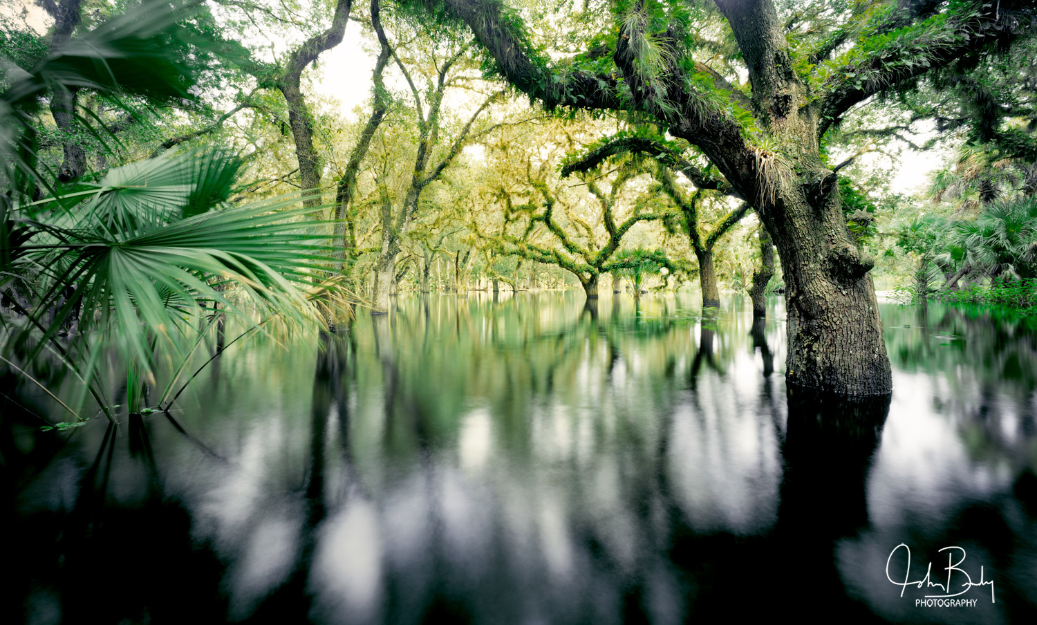 florida, fisheating creek, cypress trees, large format, film, photo