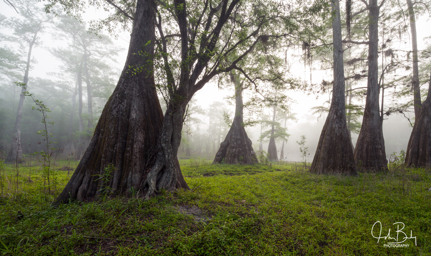 This place in the Suwannee River Valley looked like an enchanted forest the morning I photographed it. It was early spring in...