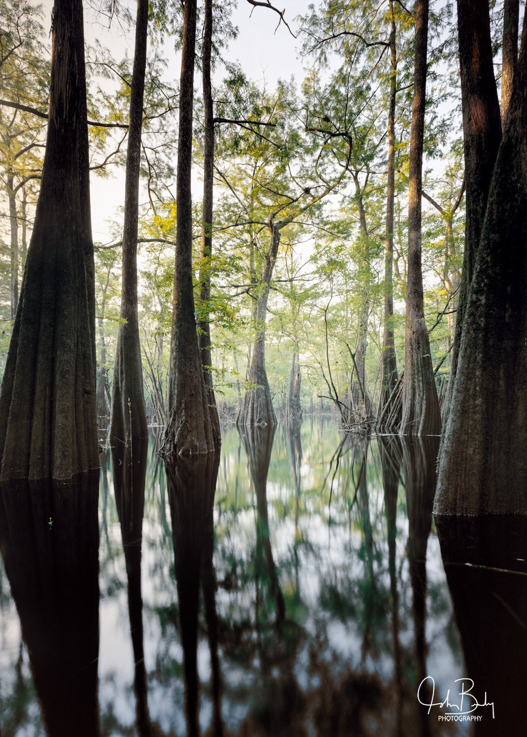 Florida, high springs district, ancient cypress, Suwannee, Santa Fe, large format film photography, wooden view camera