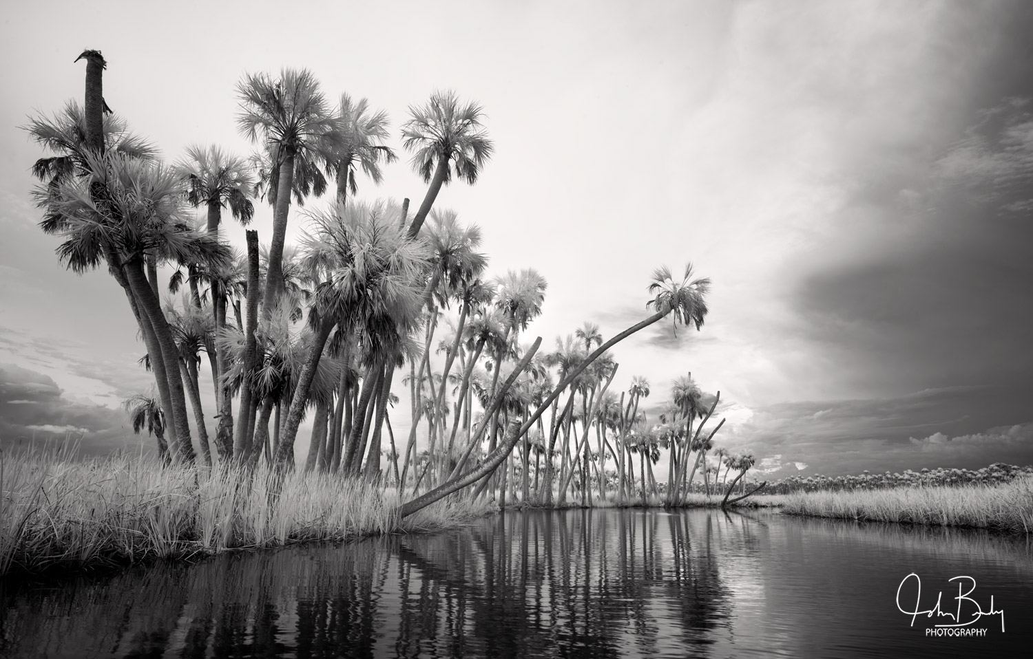 Chassahowitzka River, infrared, Sabal Palm, River, Florida, photo