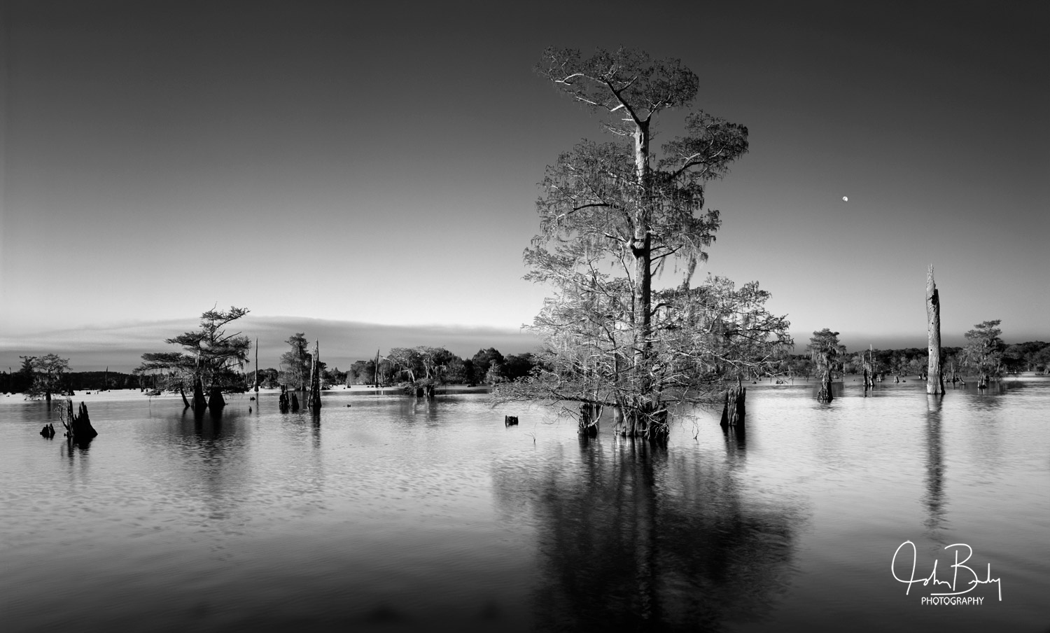 The Dead Lakes are located in the pan handle of North Florida, on the western side of the Appalachicola National Forest. This...
