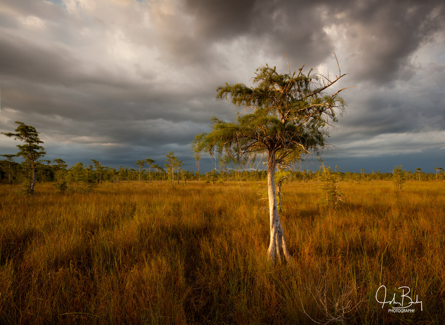 Florida, big cypress national preserve, cypress, everglades, large format fit photography, photo