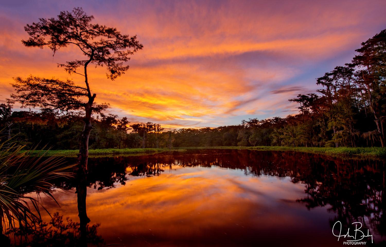 florida, fisheating creek, large format, film, photo